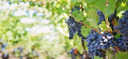 Geografía vinícola, la Denominación de Origen
