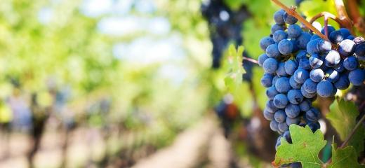 Factores que infuyen en la calidad del vino
