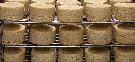 Las bacterias: clave del olor y el sabor del queso