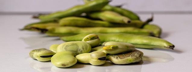Lecitina de soja: el emulgente más versátil