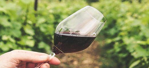 Por qué se pica o avinagra el vino